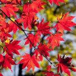 世界遺産の厳島神社と宮島周辺を子供と一緒に楽しめるスポットをご紹介!