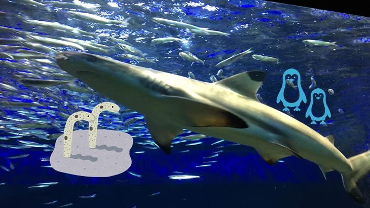冬の池袋サンシャイン水族館子供と楽しむポイント!チンアナゴも登場
