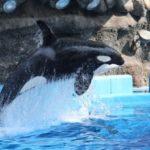 【名古屋港水族館】シャチのリンに会いに行こう!乳幼児が喜ぶショー