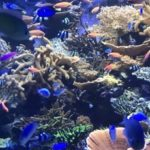 【無料】愛媛のレアな長高水族館とは?第3土曜日に高校生が運営